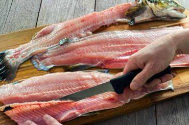 Best Fillet Knife For Saltwater Fish in 2020