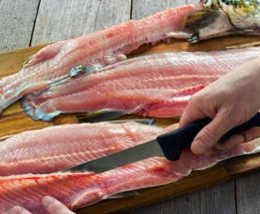 filleting-knife